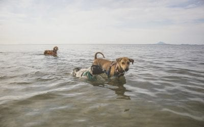 Join the Rescue Animals for Sunday FUNday